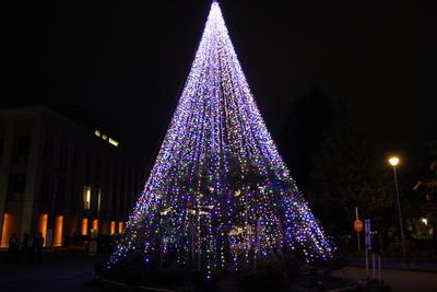 小白川キャンパスイルミネーション点灯式が開催されました!